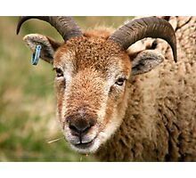 Billy Goat Gruff Photographic Print