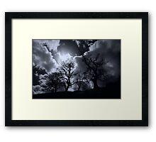 Abbey Trees, Shap Framed Print