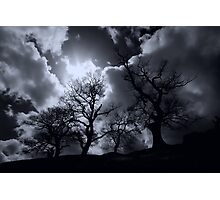 Abbey Trees, Shap Photographic Print