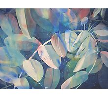 Watercolour: Summer Leaves Photographic Print