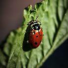 Ladybug #1 by BluAlien
