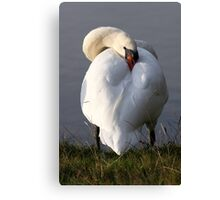 Sleepy Swan Canvas Print