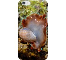 African Bubble Shell (Hydatina physis) iPhone Case/Skin