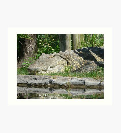 Crocodile Art Print