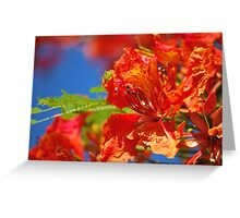 Red Flamboyant Flowers  Greeting Card
