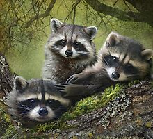 baby raccoons on forest log by R Christopher  Vest