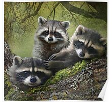 baby raccoons on forest log Poster