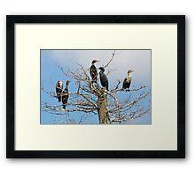 Cormorant Community Framed Print