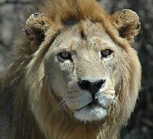 KING by David H