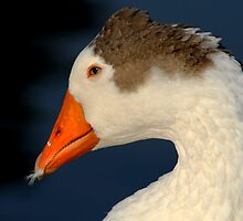 Goose with Feather in its Bill by Bonnie T.  Barry