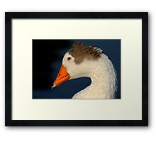 Goose with Feather in its Bill Framed Print