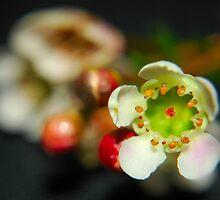 dainty flowers by zacco