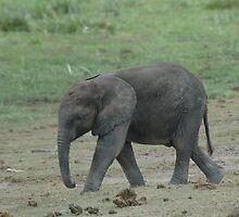 Dumbo!! by David H