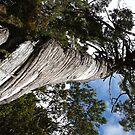 Twisted Tree by Joan Wild