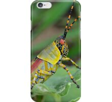 Zonocerus Elegans (Grasshopper/Locust Family) iPhone Case/Skin