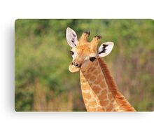 Giraffe - African Wildlife - Innocence is Adorable Canvas Print