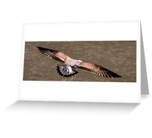 Sea Gull Gliding In To Land Greeting Card