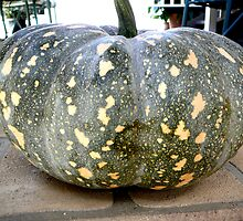 HOW'S THIS FOR A SIX KG. JAP PUMPKIN! by Ekascam
