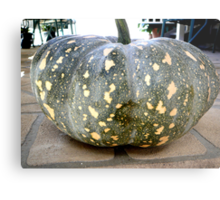 HOW'S THIS FOR A SIX KG. JAP PUMPKIN! Metal Print