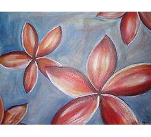 Floating frangipanis Photographic Print