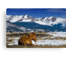 Country Relaxin' Canvas Print