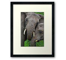 """Just Married"" (Loxodonta africana) Framed Print"