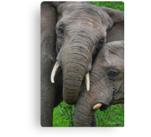 """Just Married"" (Loxodonta africana) Canvas Print"