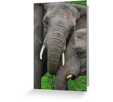 """Just Married"" (Loxodonta africana) Greeting Card"