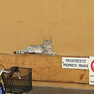 Wall art by Denzil