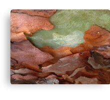 bark beauty abstract Canvas Print