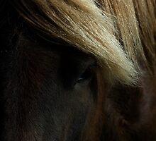 """""""island"""" Pony by Suze Chalmers"""