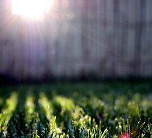 field of dreams by minau