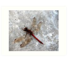 Dragonfly on harbour wall Art Print