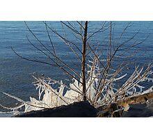 Ice Tree Photographic Print