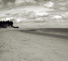 Findhorn Bay in Summer by Tez Watson