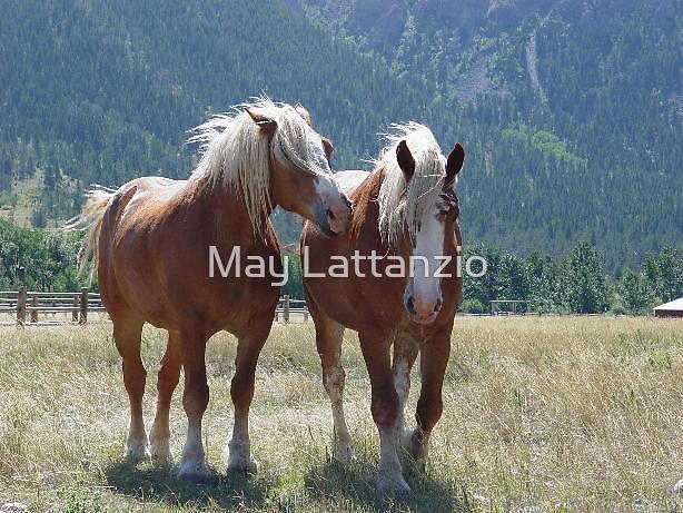 Belgians, Nye, Montana by May Lattanzio