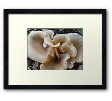 Unidentified Fungi Framed Print