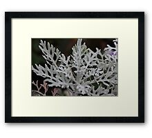 Silvery plant on a winters day Framed Print