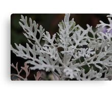 Silvery plant on a winters day Canvas Print