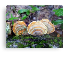 Unidentified Fungi on Oak (Orange/Green) Metal Print