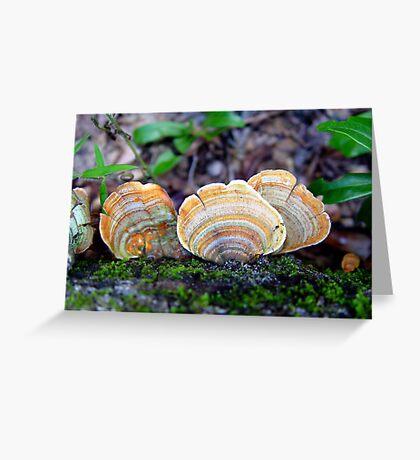 Unidentified Fungi on Oak (Orange/Green) Greeting Card