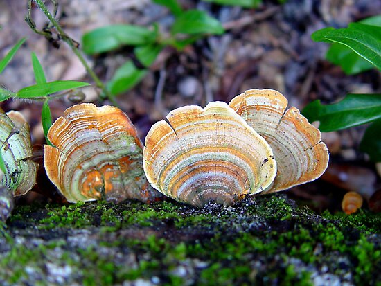 Unidentified Fungi on Oak (Orange/Green) by May Lattanzio