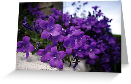 Purple Flowers by Donncha O Caoimh