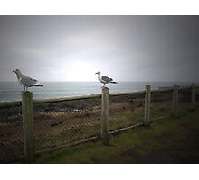 Seagulls at Dawn Photographic Print