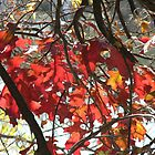 Fall Closeup by Navigator