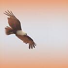 Brahminy Kite by Louise Linossi Telfer