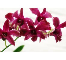 Delicate Orchids Photographic Print