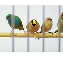 Caged Birds Photographic Print