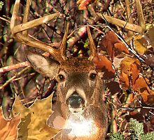 White Tail Buck in Fall Camo by Garaga