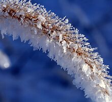Ice Crystals on Grass by fotoeluver